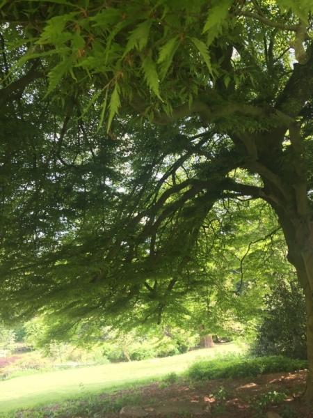 Student-Photo-1-Tree