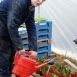 Working_in_the_polytunnel